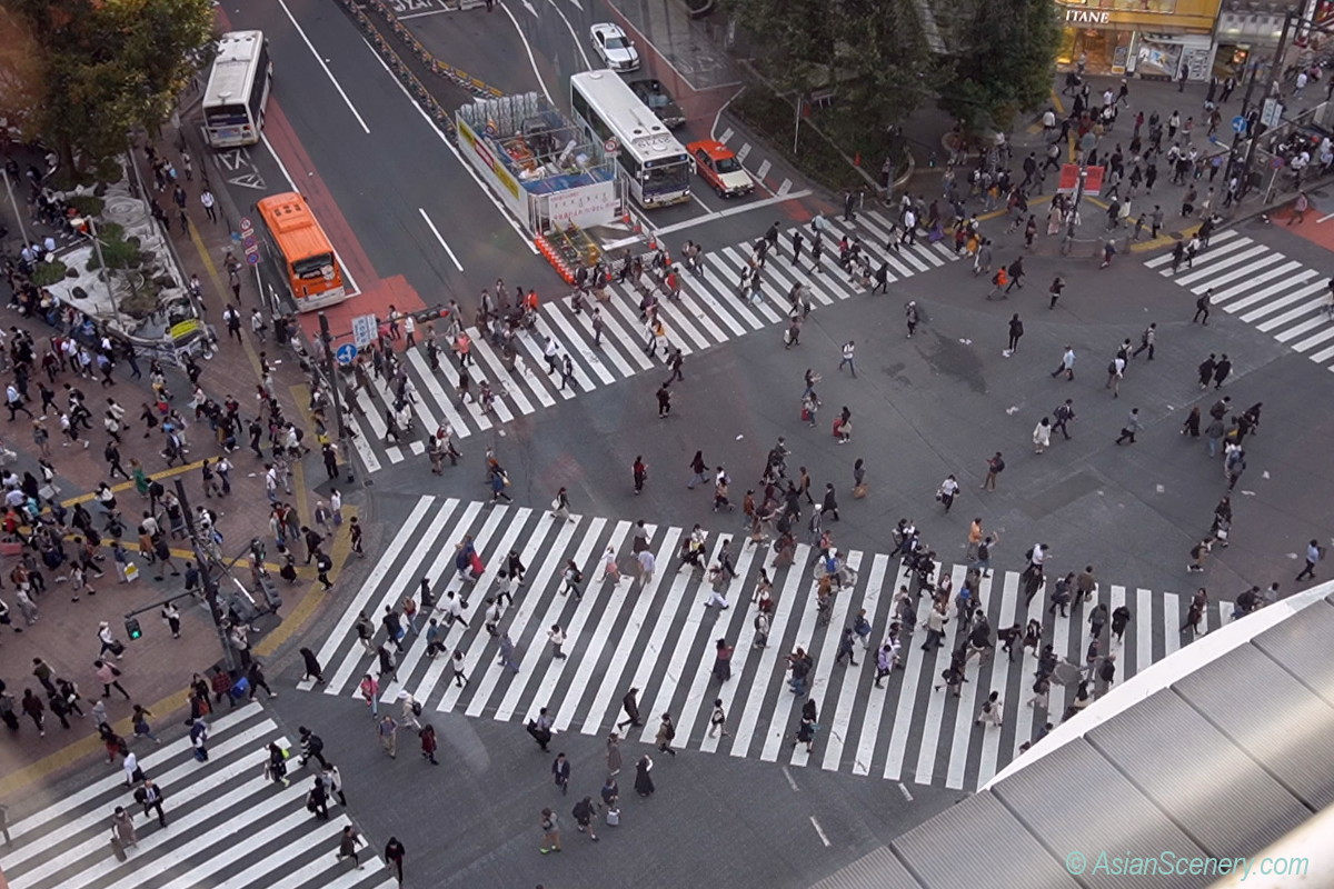 Looking down Shibuya scramble intersection from the sky 渋谷スクランブル交差点を上空から見下ろす
